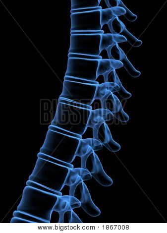 X-Ray Spine