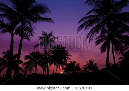 palmtrees  silhouette on sunrise in tropic