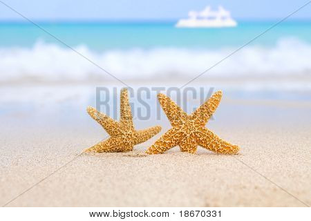 two starfish on beach, blue sea and white boat, shallow dof