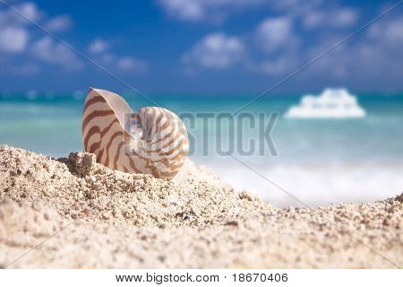 nautilus shell on beach white boat and blue tropical sea, shallow dof