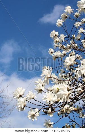Spring Sky and Flowers