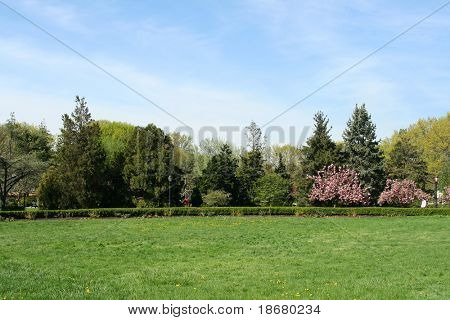 Landscape Photo of a Green Garden at Spring