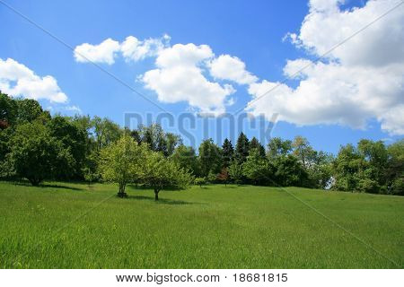 Spring Landscape on a Clear Blue Day