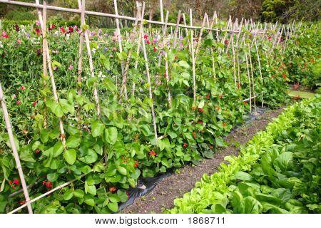Un jardín de vegetales.