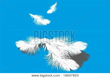 White vector feather on blue background (illustratino)