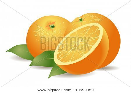 vector yummy oranges on white background with green leaves