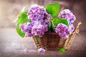 Lilac flowers bunch in a basket over blurred wood background. Beautiful violet Lilac flower still li poster
