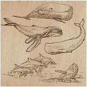cetacean poster