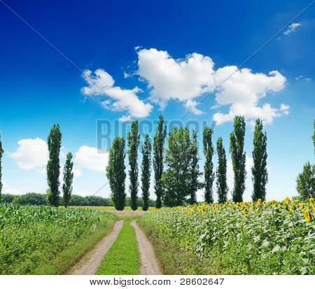 rural landscape with road under deep blue cloudy sky