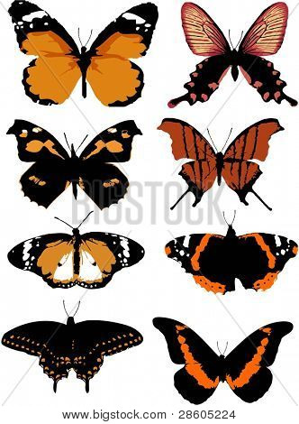 Different kinds of butterflies on a white background