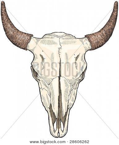 cow ckull - vector sketch