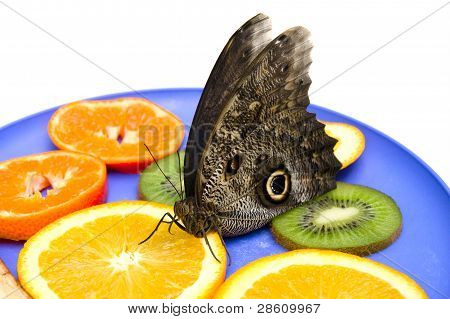 Owl butterfly eats fruits on a plate.