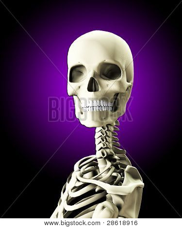 Close Up Of A Skull