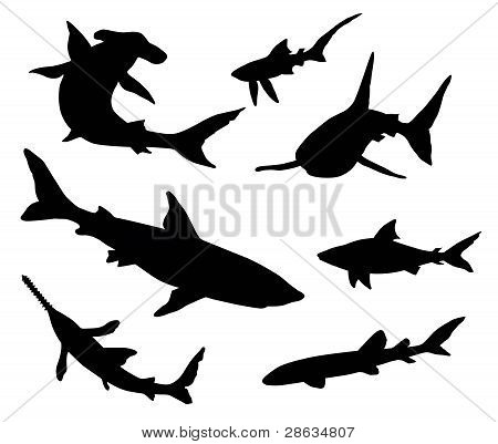 Sharks silhouettes
