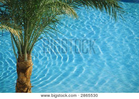 Palm On Blue Pool