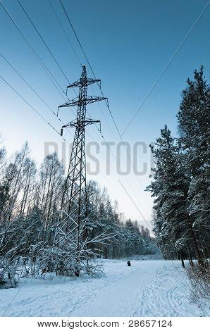 Power Lines In Snowy Wood