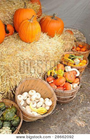 Bushel baskets of gourds and pumpkins on hay