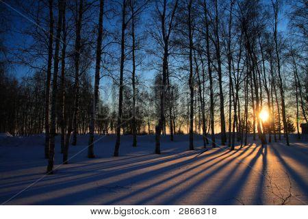 Sun Rays Through Leafless Trees