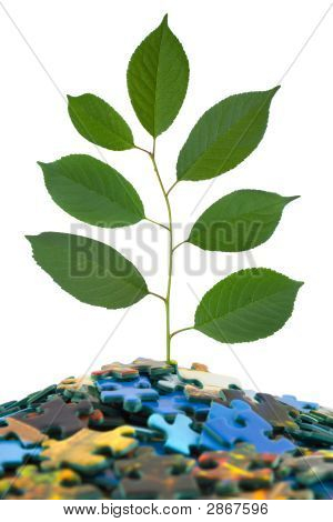 Puzzle And Plant