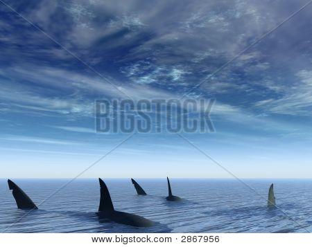 Flight Of Sharks