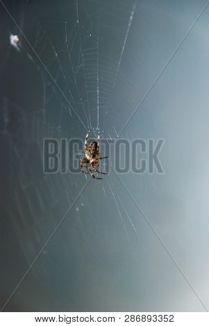 Big Dangerous Spider On Spiders