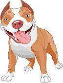 foto of pit-bull  - Pitbull - JPG