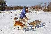 A Girl, A Wolf And Two Canine Greyhounds Playing In The Field In Winter In The Snow poster