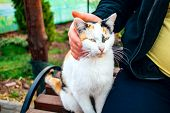 An Orange And White Cat Purrs Happily While Being Petted poster