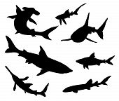 picture of guitarfish  - 7 different sharks silhouettes isolated - JPG