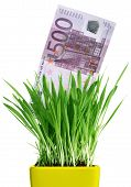 Money Growing Out Of Grass Pot