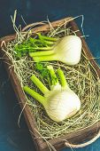 Fresh Florence Fennel Bulbs Or Fennel Bulb In Wooden Box With Dried Grass On Dark Blue Concrete Back poster