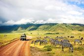 Wild Nature Of Africa. Zebras Against Mountains And Clouds.  Safari In Ngorongoro Crater National Pa poster