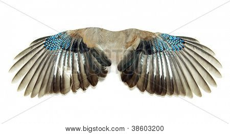 Pair of wings isolated on white