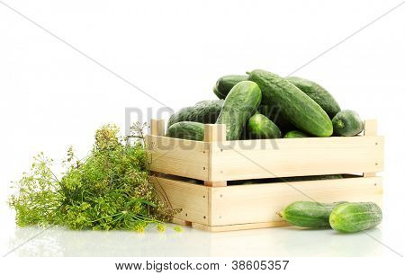 fresh cucumbers in wooden box and dill  isolated on white