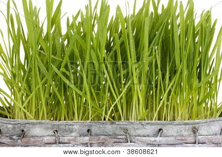 Green grass in basket close-up