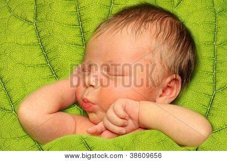 Sleeping Newborn Baby Boy in a Green Leaf