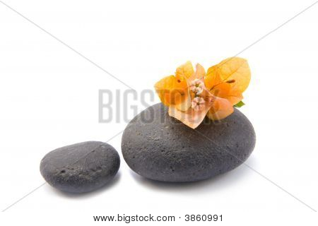 Zen Stones With Bouganvilla Flowers Isolated.