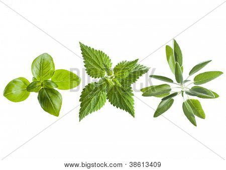 Fresh basil, nettle and sage leaves