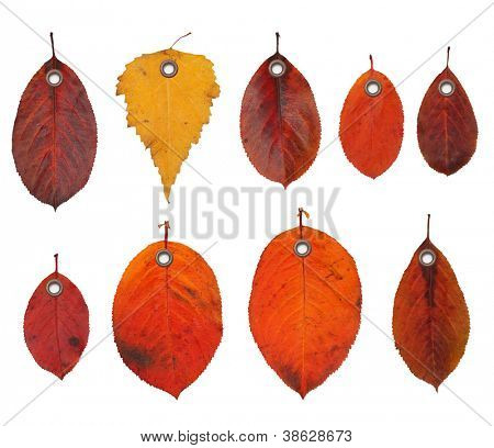 Tag label autumn leaves isolated on white background.