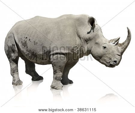 Portrait Of A Rhinoceros On White Background