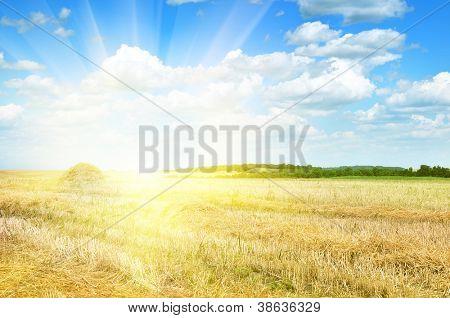 Campo iluminado pelo sol