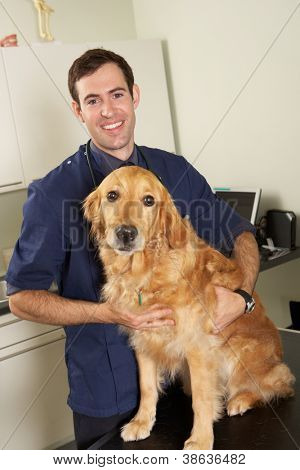 Male Veterinary Surgeon Holding Dog In Surgery