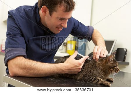 Male Veterinary Surgeon Examining Cat In Surgery