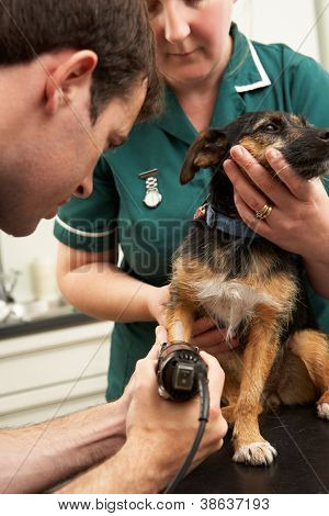 Male Veterinary Surgeon And Nurse Examining Dog In Surgery