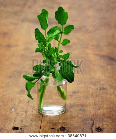 Watercress in a bottle, on a old wooden kitchen desk.