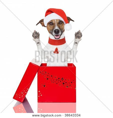 Perro de Navidad sorpresa en una caja