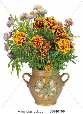 French Marigold In Jug