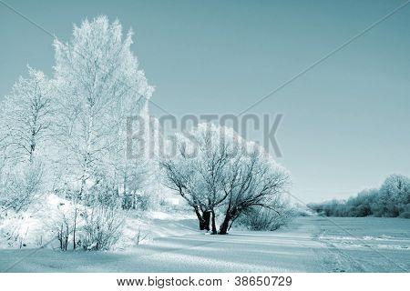 struiken in sneeuw op kust rivier