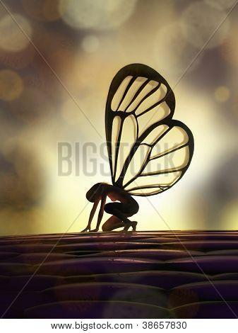 Fee Schmetterling
