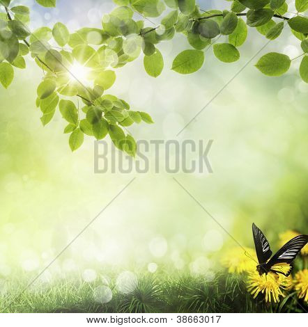 butterfly on a dandelion. spring background